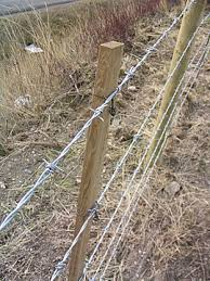 Barbed wire fence cattle Electric Fence Barbed Wire Is Particularly Effective For Containing Cattle Typically Four Strands Of Barbed Wire With The Lowest Strand 1216 Inches From The Ground And Custom Fencing Ab Custom Fencing And Animal Management Systems Barbed Wire Fences