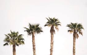 palm trees tumblr vertical. I Love Palm Trees Tumblr Vertical N