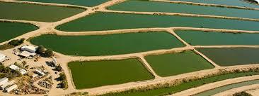 """Képtalálat a következőre: """"algafarm"""""""
