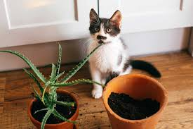 what houseplants are toxic to cats
