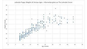 Labrador Retriever Puppy Weight Chart Labrador Weight Chart Labradorpuppyweightchartinkg