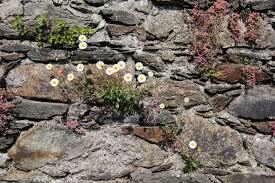 gardening in retaining walls how to