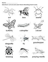 insect coloring pages insect coloring pages for kindergarten kids coloring image result for insect crawly things