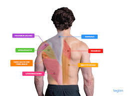best compound back exercises for a full