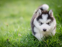 cute puppy. Modren Cute Cute Puppy Names Intended Cute Puppy