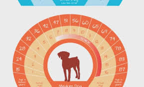 Dog Years Age Chart Dog Age Chart Gallery Of Chart 2019