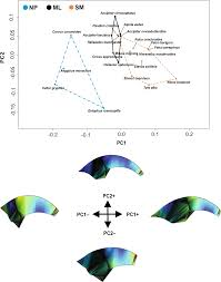 Raptor Talon Shape And Biomechanical Performance Are