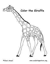 Giraffe Coloring Giraffe Coloring Pages For Preschool
