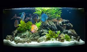 Die Richtige Beleuchtung Im Aquarium Ist Sowohl Für Die Pflanzen Als Auch  Für Die Fische Sehr