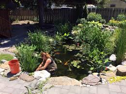 how to clean a koi pond. Fine Koi Woman Cleaning Koi Pond On How To Clean A Koi Pond E