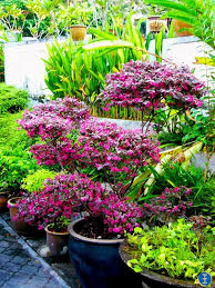 Small Picture Tropical Garden Design Garden Design Ideas