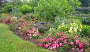 Small Picture 12 Ways to Landscape Using Flower Carpet roses Your Easy Garden