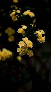 Yellow Flower Aesthetic Wallpapers on ...