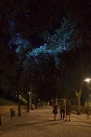 Moonlight Tree Lighting Moonlight For Colle Dellinfinito Recanati Italy Client