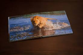 coffee table capturing and printing wildlife for charity lexjet