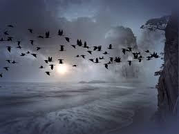 """Résultat de recherche d'images pour """"oiseaux en vol"""""""