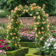 home depot arbor rose trellis garden obelisk for