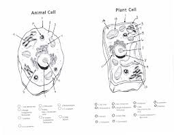 Small Picture Emejing Animal Cell Coloring Worksheet Key Pictures Printable