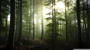 Free download Forest Hd Desktop ...
