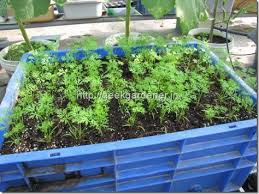 Step By Step With Photos How To Grow Carrots In Containers