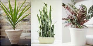 Bathroom : Bathroom Plants For Good Images Inspirations Artificial ...