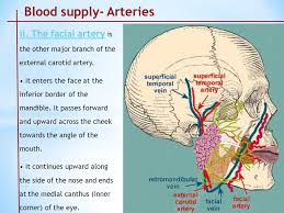arteries of the face arterial supply of head and neck ppt video online download