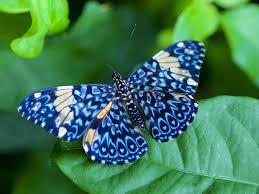 real beautiful colorful butterflies.  Real Colourful Butterflies HD Wallpapers For Real Beautiful Colorful R