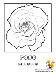 Small Picture National Symbols Of India Coloring Pages Coloring Pages