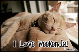 Image result for cat weekend