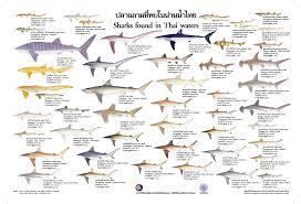 Identification Materials On Sharks Cites