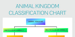 Kingdoms Of Biology Chart Animal Kingdom Classification Chart By James Infogram