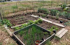 Garden Plot Design Ideas My First Garden Photos 7 Different Community Garden Plot