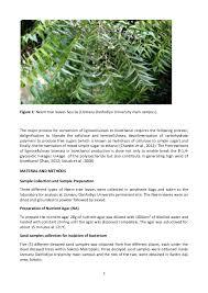 bioethanol from neem tree leaves via organisms hydrolysis 3 3 figure 1 neem tree
