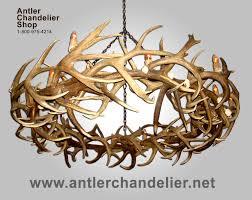 real antler elk mule deer round chandelier rmdrc