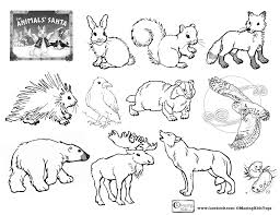 Small Picture Coloring Pages Of Winter Animals Coloring Pages
