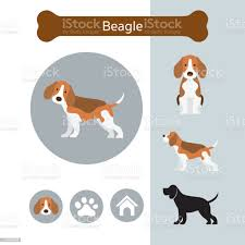 Beagle Dog Breed Infographic Stock ...
