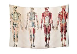 Human Anatomy Tapestry Vintage Chart Of Body Front Back