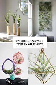 Air Plant Display 27 Coolest Ways To Display Air Plants Shelterness