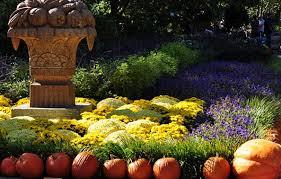fall garden flowers. Pumkins And Flowers In A Fall Garden L