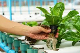 kratky hydroponic system amazing hydroponic systems for indoor gardening