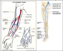 Vein Chart For Shooting Up 35 Iv Therapy Tips Tricks For Nurses Nursebuff