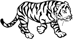 Small Picture 28 Tiger Coloring pages Wild and Majestic Animals