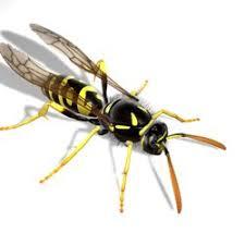 pest control eugene. Perfect Eugene Photo Of Pointe Pest Control  Eugene OR United States Inside Eugene E