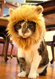 """Résultat de recherche d'images pour """"image lion amusant"""""""