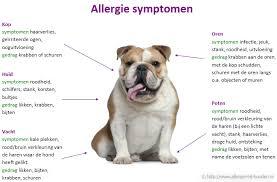 Allergie bij honden