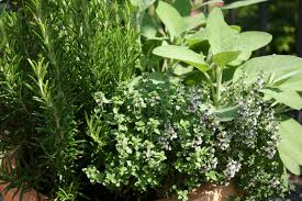 herbs and arsenic trace elements