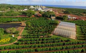 Although there are more highly prized and definitely more expensive coffees grown around the world, the different types from hawaii have. What S Growing On The Kauai Coffee Farm Blog Kauai Coffee Company