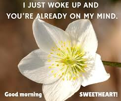 Love Flower Quotes Cute Love Flower Quotes Cute Good Morning Love Quotes Awesome Quotes 80
