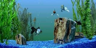 Aquarium Backgrounds Why You Should Use A Fish Tank Background The Aquarium Guide