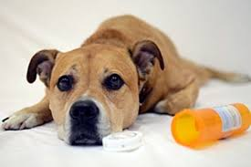 Image result for march pet poison prevention month
